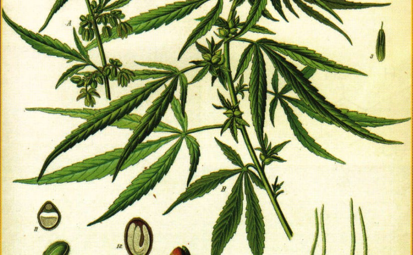 Paper: Industrial Hemp - a promising source for biomass